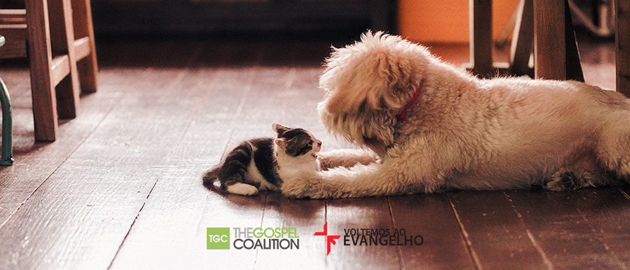 o-evangelho-segundo-caes-e-gatos