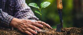 botanica-jardins-um-agricultor-e-a-teologia-biblica