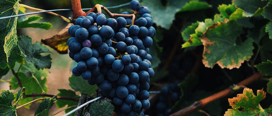 uma-teologia-do-vinho